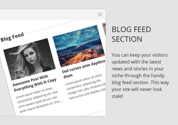 Blog Feed Section